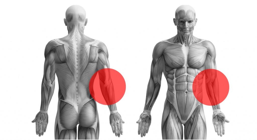 VERTICS Sleeves bei Epicondylitis